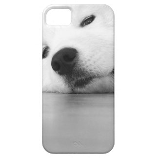 Samoyed Photo Dog White iPhone 5 Case