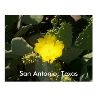 San Antonio, Texas Postcard