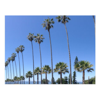 San Diego California Palm Tree Postcard