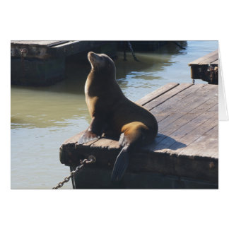 San Francisco Pier 39 Sea Lion #2 Card