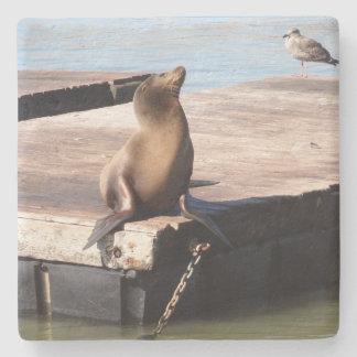 San Francisco Pier 39 Sea Lion Coaster