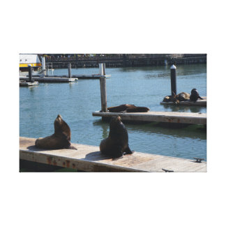 San Francisco Pier 39 Sea Lions #3 Canvas