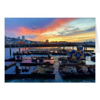 San Francisco Pier 39 Sea Lions #8-1 Card