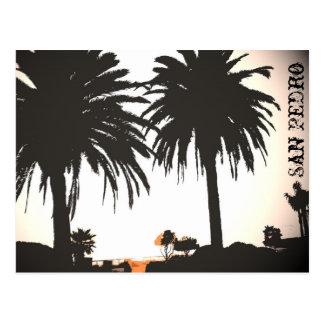 San Pedro Royal Palms Postcard