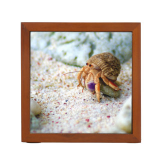 Sand Crab, Curacao, Caribbean islands, Photo Desk Organiser
