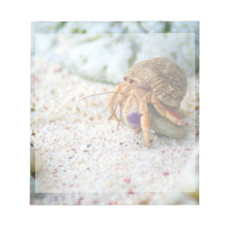 Sand Crab, Curacao, Caribbean islands, Photo Notepad