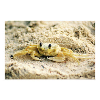 Sand Crab, Curacao, Caribbean islands, Photo Personalised Stationery
