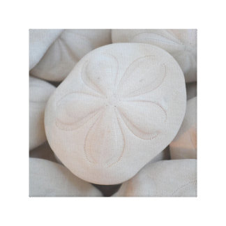Sand Dollar Canvas Art