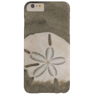 Sand dollar (Echinarachnius parma) Barely There iPhone 6 Plus Case