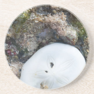 Sand Dollar in a Fiji Reef at Low Tide Coaster
