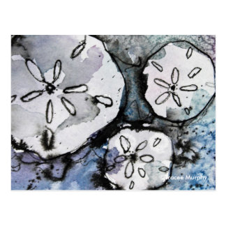 Sand Dollar Trio Postcard