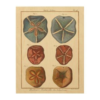 Sand Dollars Gems Wood Wall Decor