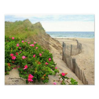 Sand Dunes and Beach Roses ~ Block Island, RI Photo Print