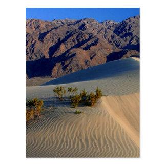 Sand Dunes Death Valley Postcard