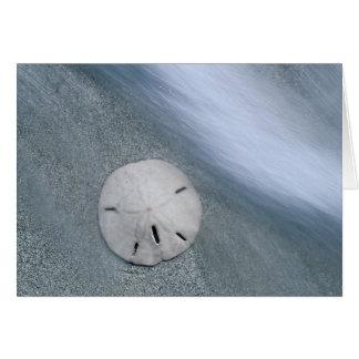 Sanddollar on Beach | Sanibel Island, Florida Card