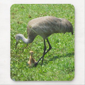 Sandhill Crane and Chick Mouse Pad
