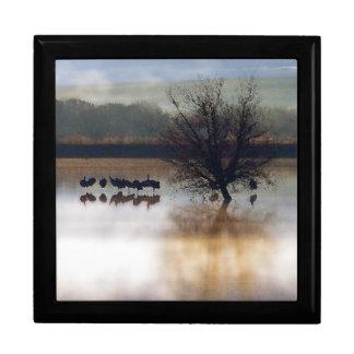 Sandhill Crane Birds Wildlife Animals Photography Large Square Gift Box