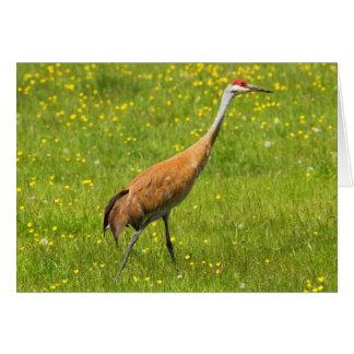 Sandhill Crane Card
