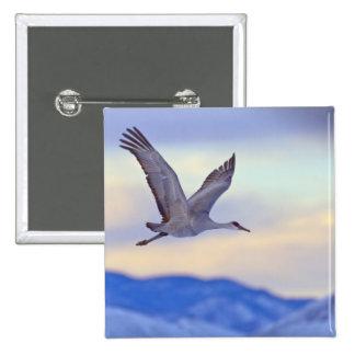 Sandhill crane flying at sunset 15 cm square badge