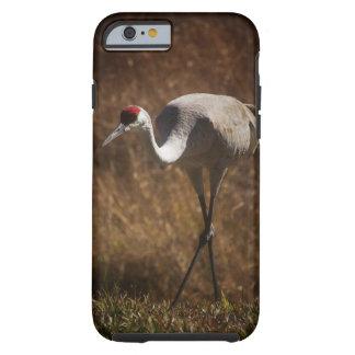 Sandhill Crane Tough iPhone 6 Case