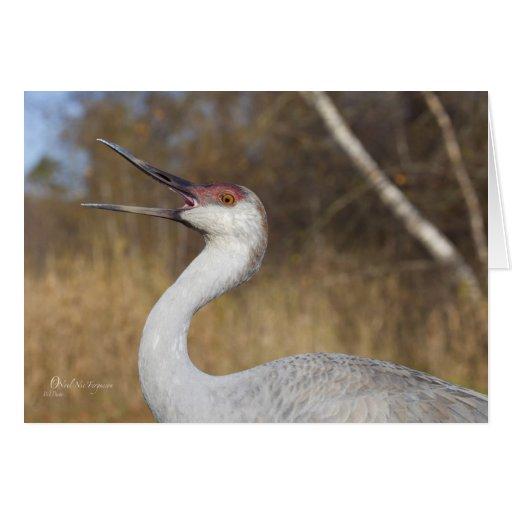 Sandhill Crane trumpeting, Canada Greeting Card