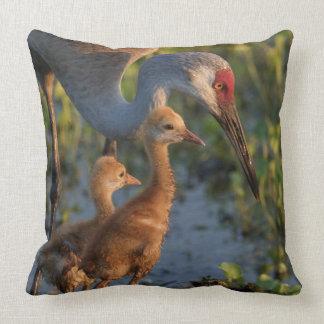 Sandhill crane with chicks, Florida Cushion