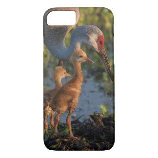 Sandhill crane with chicks, Florida iPhone 8/7 Case
