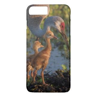 Sandhill crane with chicks, Florida iPhone 8 Plus/7 Plus Case