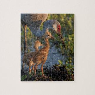 Sandhill crane with chicks, Florida Jigsaw Puzzle