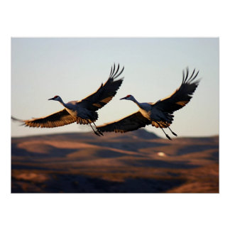 Sandhill Cranes at morning Poster