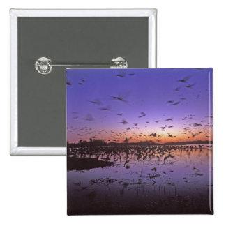 Sandhill Cranes Grus canadensis) Platte 2 15 Cm Square Badge