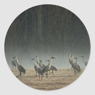 Sandhill Cranes in the Early Morning Spring Mist Round Sticker