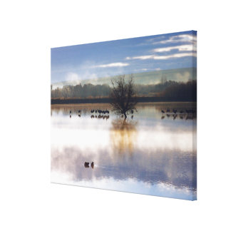 Sandhill Cranes Photography Stretched Print