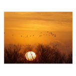 Sandhill cranes silhouetted aginst rising sun post card