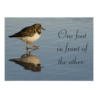Sandpiper bird motivational Poster