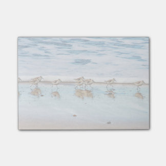 Sandpipers Running Along The Beach Post-it Notes