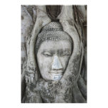 Sandstone head of Buddha surrounded by tree Photo