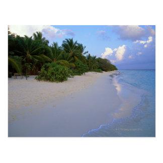 Sandy Beach 7 Postcard