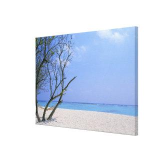Sandy Beach 9 Canvas Print