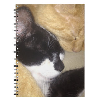 Sandybean and Foofy snuggling for nap time Notebooks