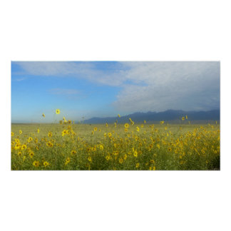 Sangre de Cristo, Great Sand Dunes and flowers Poster