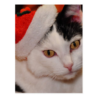 Santa claus cat - merry christmas - pet cat postcard