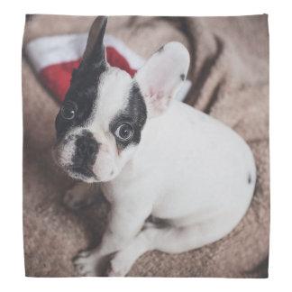 Santa claus dog -funny pug - dog claus bandana