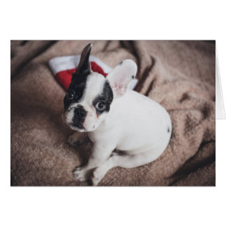 Santa claus dog -funny pug - dog claus card