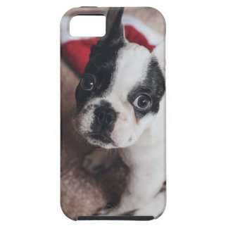 Santa claus dog -funny pug - dog claus iPhone 5 covers