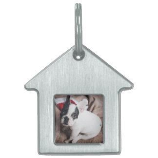 Santa claus dog -funny pug - dog claus pet tag