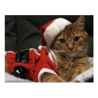 Santa Claws Post Card
