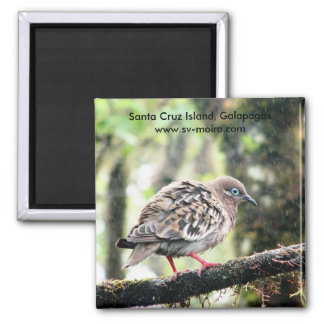 Santa Cruz Island, Galapagos, bird in rain Magnet