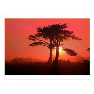 Santa Cruz Sahara Postcard