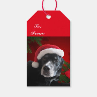 Santa Dog-Lab/Rottweiler with Holiday Background Gift Tags
